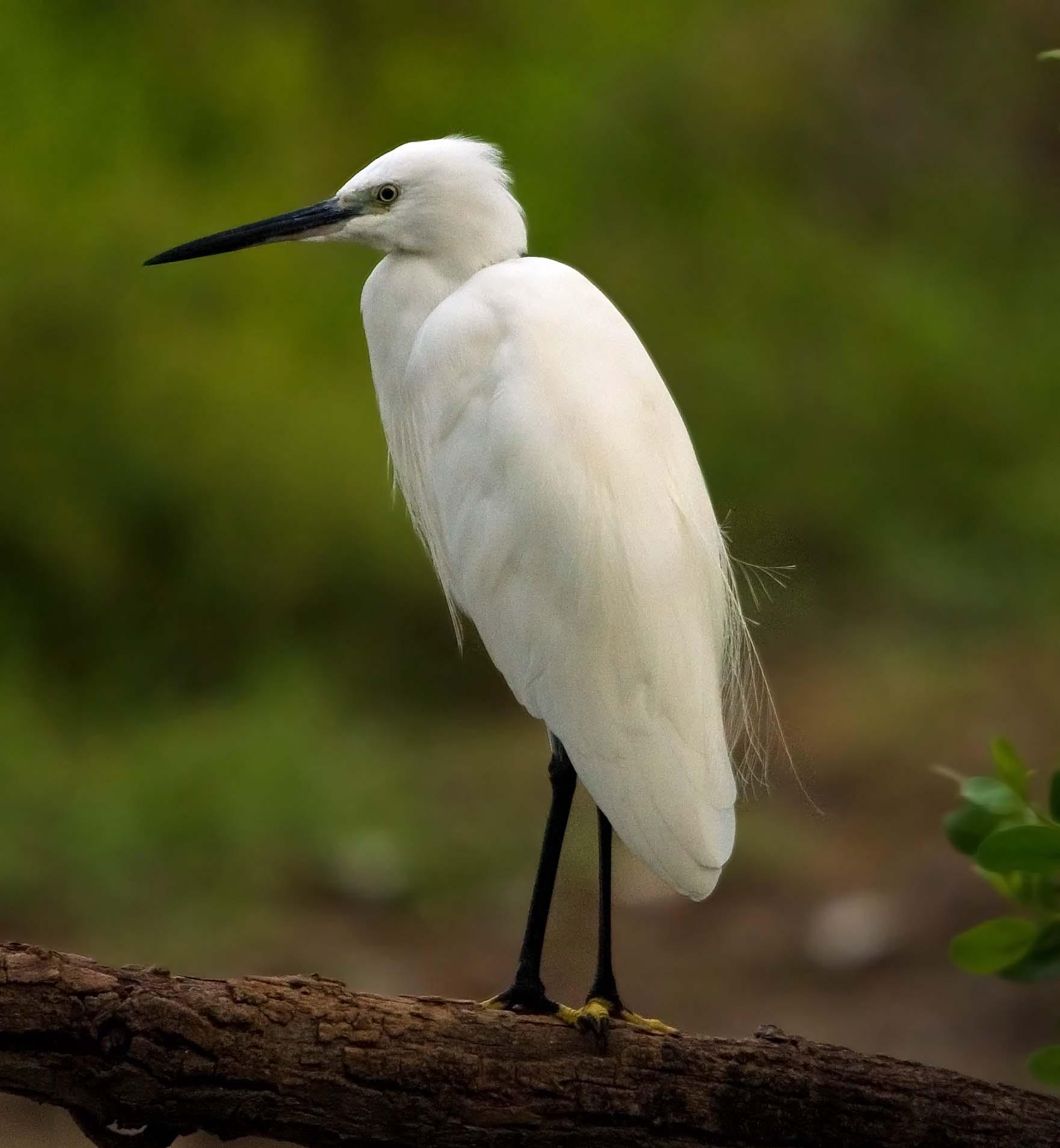 птицы речные фото